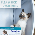 5 Tips For Buying Safe Flea And Tick Prevention Janery