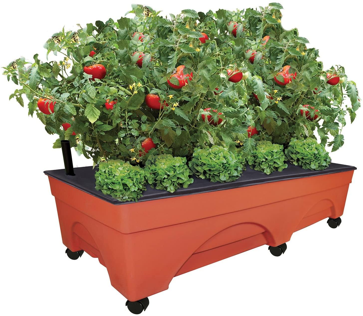big pickers patio garden kit