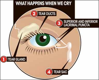 Tips For Dry Eyes From Contacts   Spectacle Shoppe Canada