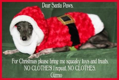 Funny Christmas Dog Memes IMAGES SportLeash