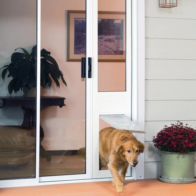 dog doors for cold weather