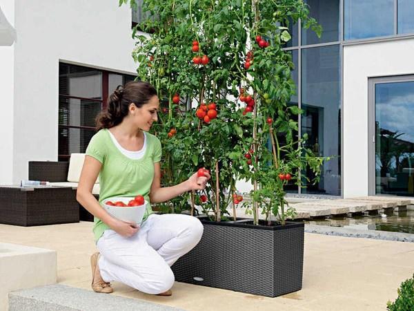 urban zeal planters