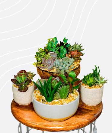 small plants to decorate a meditation corner