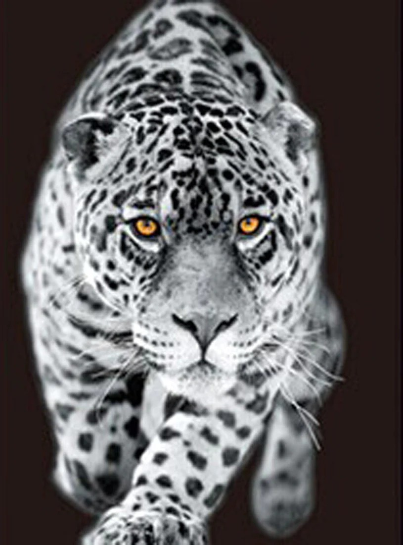 Leopard White Tiger Lion 3D Flip Matted or FramedBlack