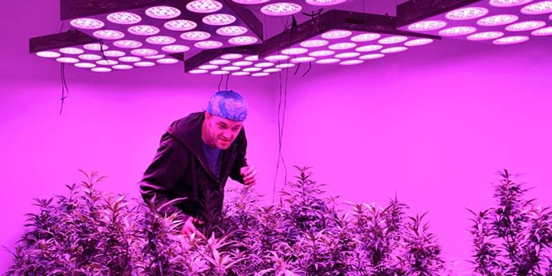 Led Grow Lights Vs Hps