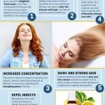 8 Amazing Benefits And Uses Of Lemon Essential Oil Organic Aromas