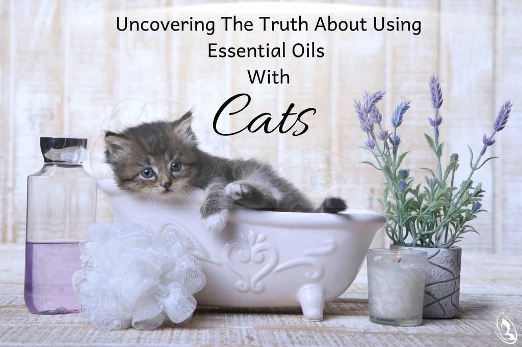 Doterra Oils Safe Cats