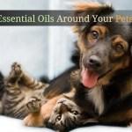 Using Essential Oils Around Your Pets Organic Aromas