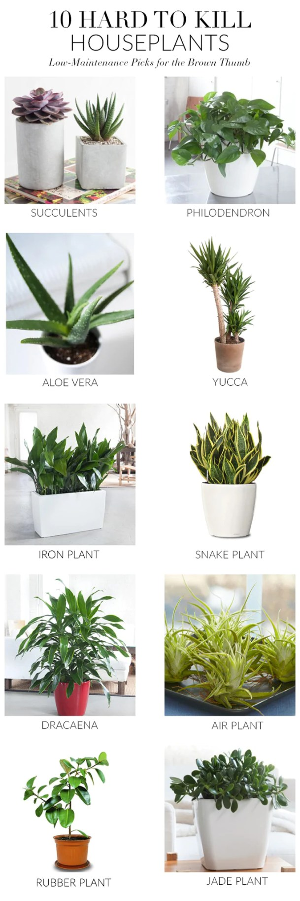 hard to kill house plant list