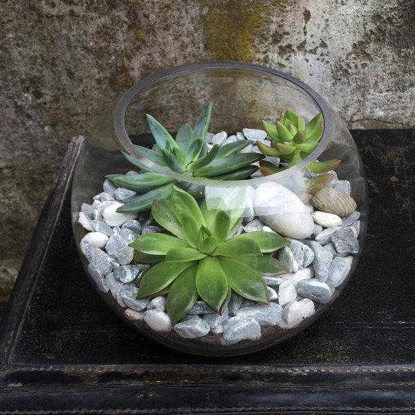 terrarium with succulents