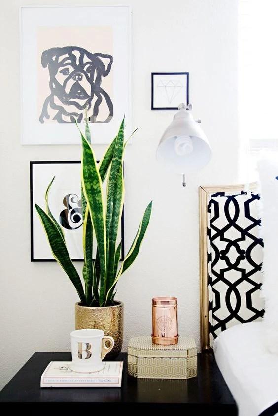snake plant in bedroom