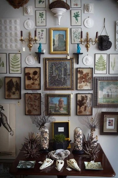 Framed plants and curiosities