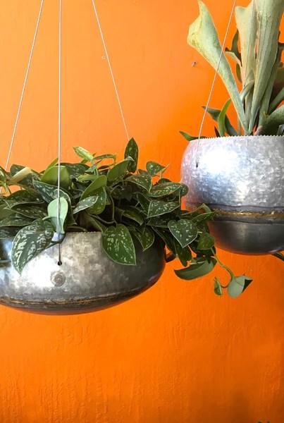 Hanging Ferns Indoors