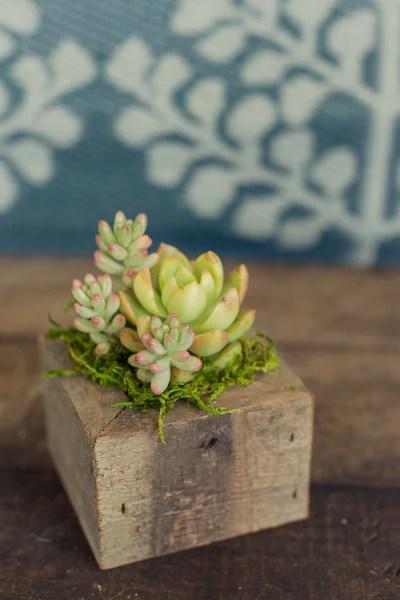 Hanging Pots Plants