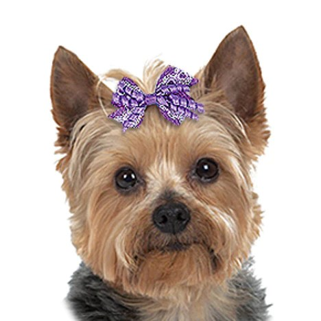 Small Dog Bow Lace Amp Curls Dog Hair Bows Small Dog Mall