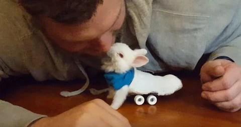 Meet Wheelz The Cutest Baby Bunny Ever Animal Hearted Apparel