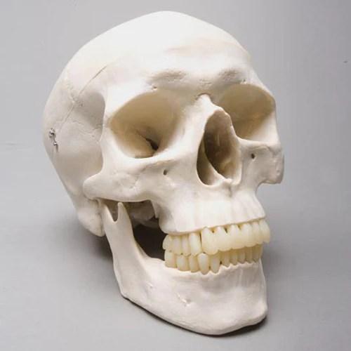 Harveys Skulls Baguette