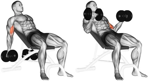 incline dumbbell curls