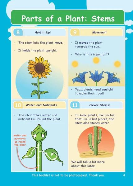 Non Flowering Plants Ks2