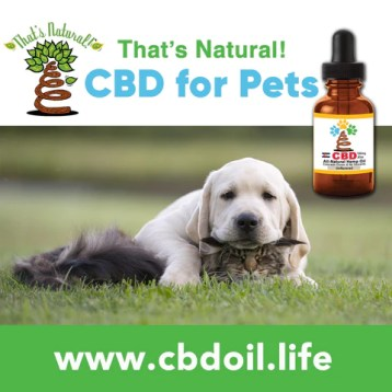 Our CBD Oil for Pets is getting great reviews from customers! One customers had a dog with multiple tumors, who was not doing well at all. She could hardly walk, would cry out in pain, and was always extremely anxious because of the pain she was in. Her breathing was extremely fast due to the anxiety. After just one or two days of That's Natural's Pet tinctures, her breathing slowed, her movements became more fluent, and she was much more calm. See more about That's Natural full spectrum CBD-rich hemp oil at www.cbdoil.life and @cbdhempoiland find us in the #Aspen Valley right outside of #Basalt at our That's Natural Life Force Market! #carbondale #glenwoodsprings #pets #naturalpet #dogs #cats #caninesofaustin cbdhempoil #dogstagram #dogsofinsta #dogsoftwitter #animals #animalsaddict #petsagram #dogslife #catslife #holistic #healing #essentialoils #ThatsNatural #naturalbeauty