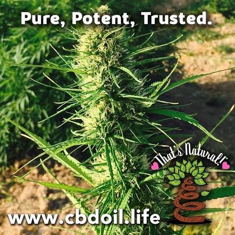 That's Natural CBDA Oil - Entourage Effect - That's Natural full spectrum CBD oil products with cannabinoids and terpenes - experience the entourage effect with Thats Natural CBD Oil, legal hemp CBD, hemp legal in all 50 States, CBD, CBDA, CBC, CBG, CBN, Cannabidiol, Cannabidiolic Acid, Cannabichromene, Cannabigerol, Cannabinol; beta-myrcene, linalool, d-limonene, alpha-pinene, humulene, beta-caryophyllene - find at cbdoil.life and www.cbdoil.life