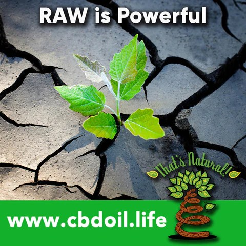 Raw CBD Oil, CO2 extracted raw cannabinoids, raw terpenes - That's Natural full spectrum phytocannabinoids entourage effect - Precious plant compounds in That's Natural full spectrum CBD-rich hemp oil include other cannabinoids besides CBD (CBDA, CBC, CBG, CBN), terpenes (beta-myrcene, linalool, d-limonene, alpha-pinene, humulene, beta-caryophyllene) and polyphenols - See more about safe and effective hemp-derived CBD oil from Thats Natural at www.cbdoil.life and cbdoil.life and www.thatsnatural.info - legal hemp CBD, legal in all 50 states