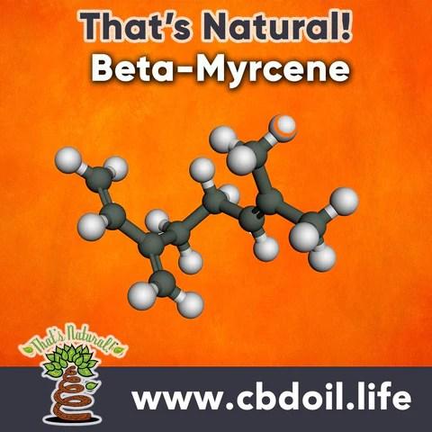 Terpene profile - Beta Myrcene - hemp-derived CBD from That's Natural full spectrum phytocannabinoids entourage effect - Precious plant compounds in That's Natural full spectrum CBD-rich hemp oil include other cannabinoids besides CBD (CBDA, CBC, CBG, CBN), terpenes (beta-myrcene, linalool, d-limonene, alpha-pinene, humulene, beta-caryophyllene) and polyphenols - See more about safe and effective hemp-derived CBD oil from Thats Natural at www.cbdoil.life and cbdoil.life and www.thatsnatural.info - legal hemp CBD, legal in all 50 states
