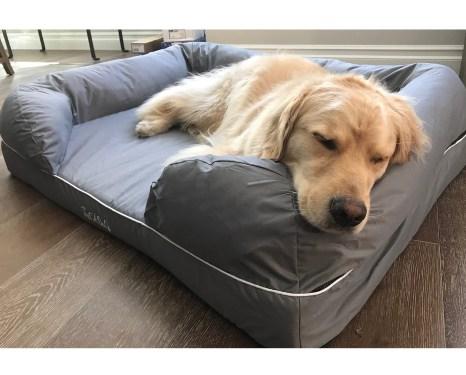 Image result for dog in dog bed