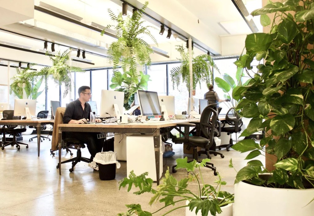 Adding office plants improves employee cognition