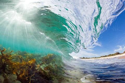 Fine Art Nature Photography Aquatic Elements by Landscape and Nature Photographer Warren Keelan