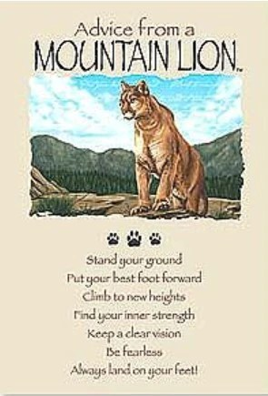 Advice From A Mountain Lion Greeting Card Birthday