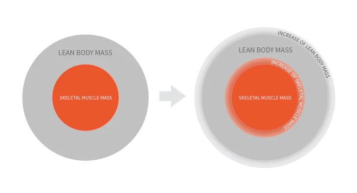 how to find lean muscle mass