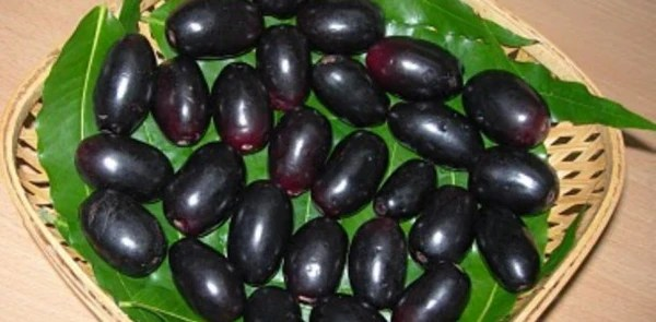 Njaval Or Naval Tholi Or Bark Or Jamun Dried Bark Buy