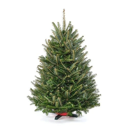 Real Tabletop Christmas Tree With Stand Real Christmas Trees Delivered