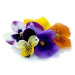 Fresh Edible Viola Petite Ingredient
