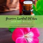 Geranium Essential Oil Recipes Uses And Benefits Eo Spotlight