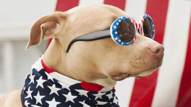 Image result for 4th of july dog in sunglasses