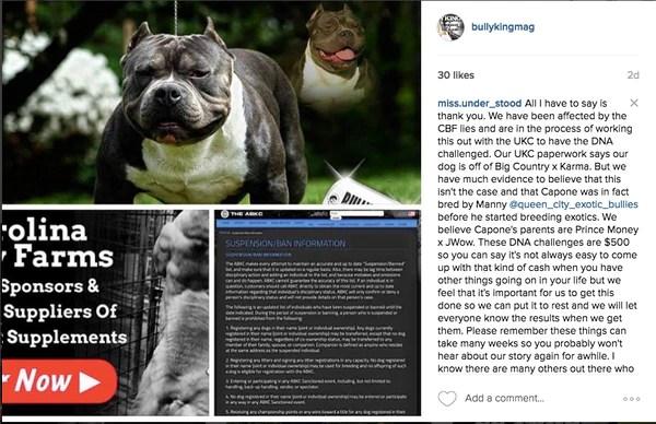 Carolina Bully Farms Receives UKC Ban   BULLY KING Magazine