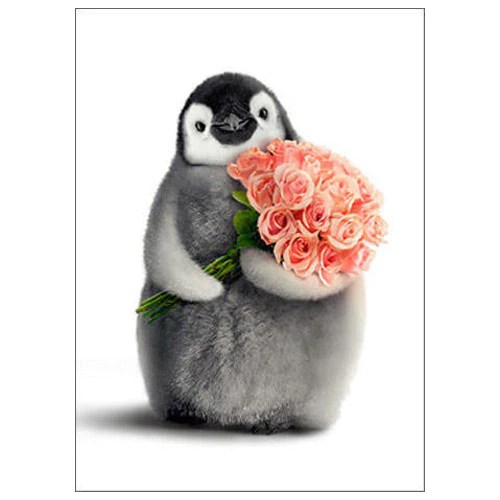 Happy Valentines Day Penguin Card Penguin Gift Shop