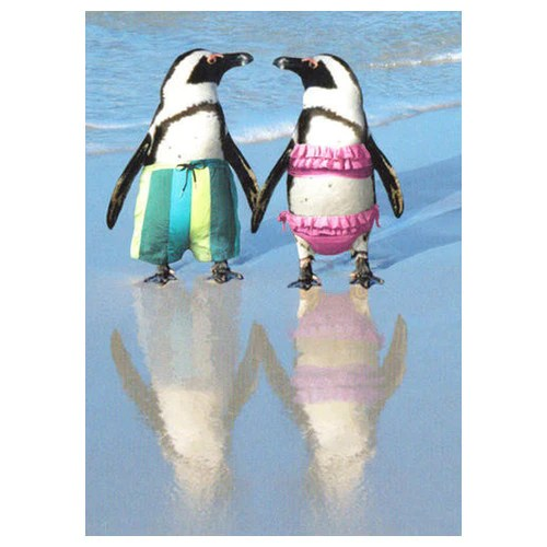 Penguins On The Beach Anniversary Card Penguin Gift Shop