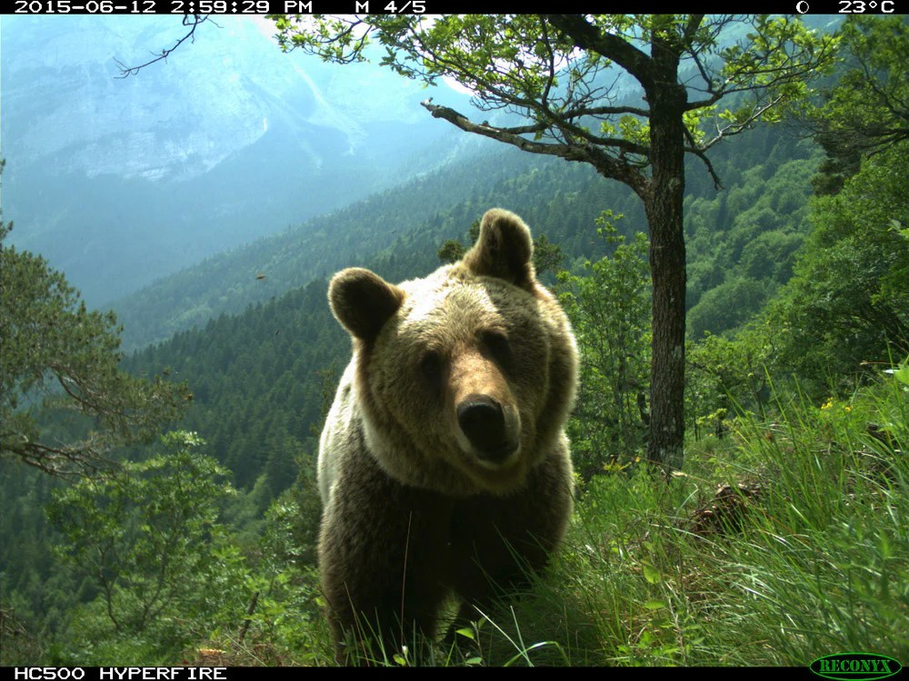 2015 International Trailcam Pictures - Trailcampro.com