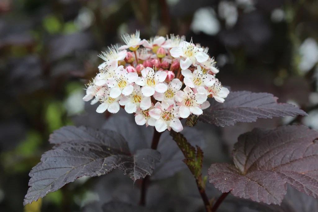 Aquatic Plants White Flowers