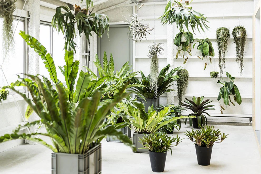 How To Use Feng Shui To Organize Your Plants Indoors?