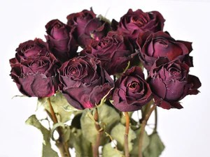Dried Rose Flowers   Real Dried Bouquet   Roses Deep Bordeaux Red     Dried Rose Flowers   Real Dried Bouquet   Roses Deep Bordeaux Red   Real  Dried F
