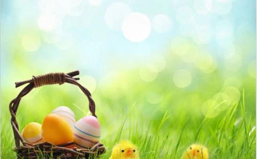 Easter 'chicks w/eggs' Seasonal Photography Studio ...