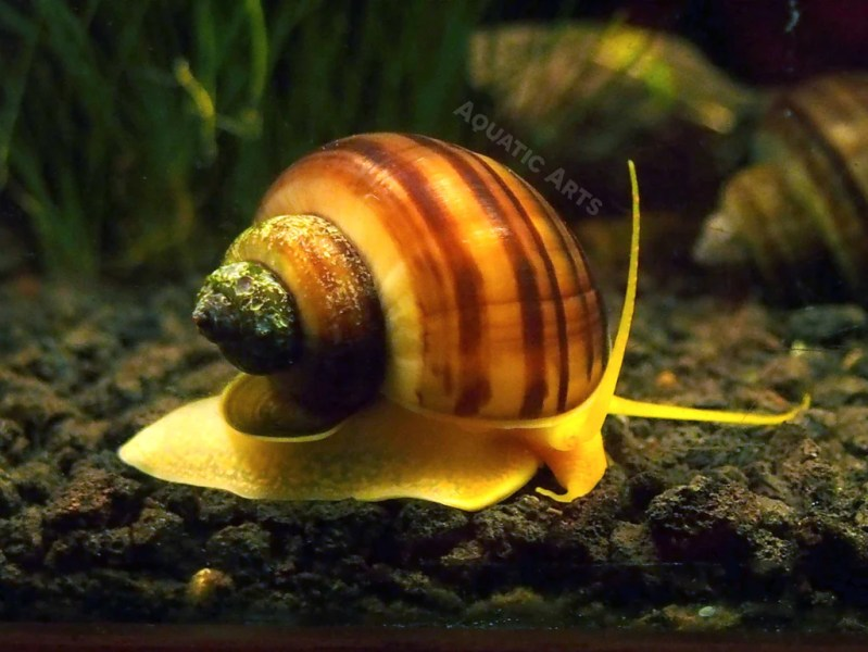 Snail » Download WALLPAPER | Full Wallpapers