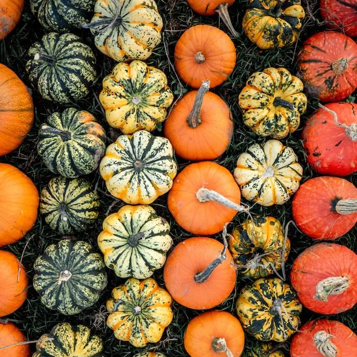 various pumpkins in patch