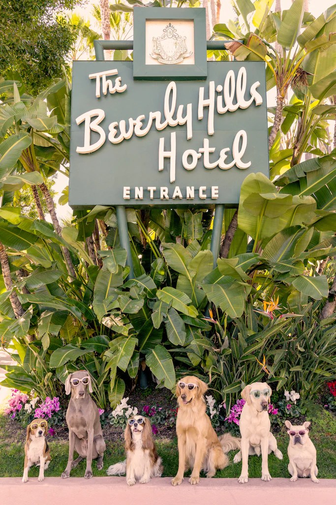 gray malin dogs at the beverly hills hotel vertical 11 5 x 17