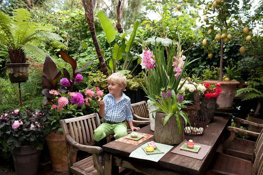 best plants for small gardens and pots