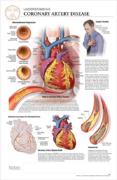 11x17 Disease Poster  Understanding the Effects of